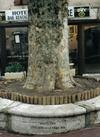 Vign_rn_13_bis_arbre_assis
